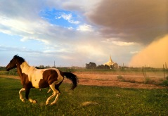 PNI dust storm